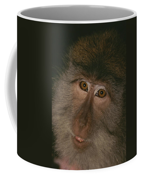 Asia Coffee Mug featuring the photograph A Close View Of The Face by Tim Laman