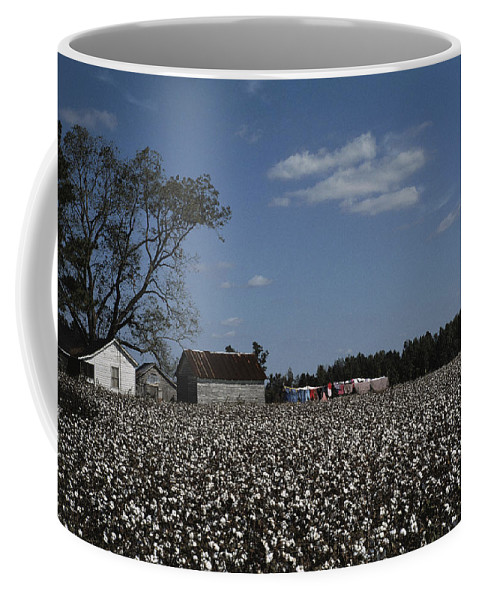 Farmers And Farming Coffee Mug featuring the photograph A Cotton Field Surrounds A Small Farm by Medford Taylor