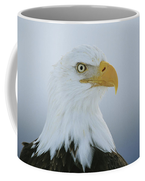 Animals Coffee Mug featuring the photograph A Portrait Of An American Bald Eagle by Klaus Nigge