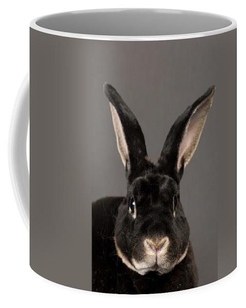 Property Released Photography Coffee Mug featuring the photograph A Rex Rabbit Oryctolagus Cuniculus Rex by Joel Sartore