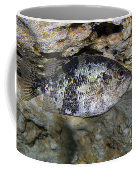 Fish Coffee Mug featuring the photograph A Shadow Bass Hovers Motionless by Terry Moore