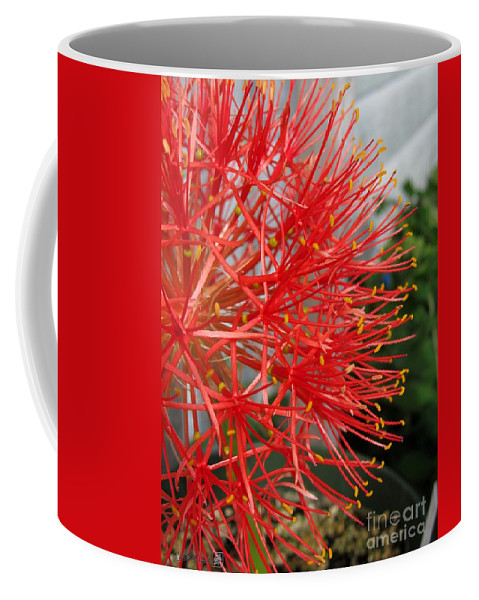 African Blood Lily Coffee Mug featuring the photograph African Blood Lily Or Fireball Lily by J McCombie