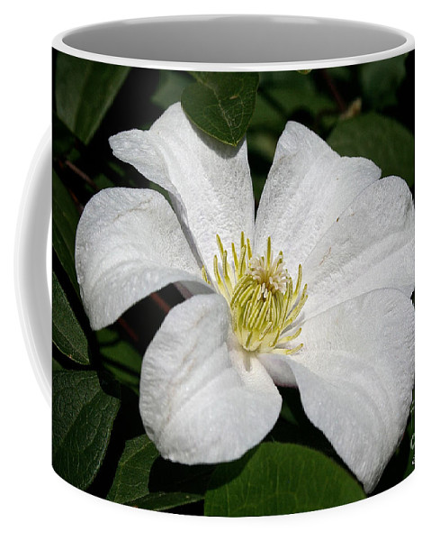 Outdoors Coffee Mug featuring the photograph Artic White by Susan Herber