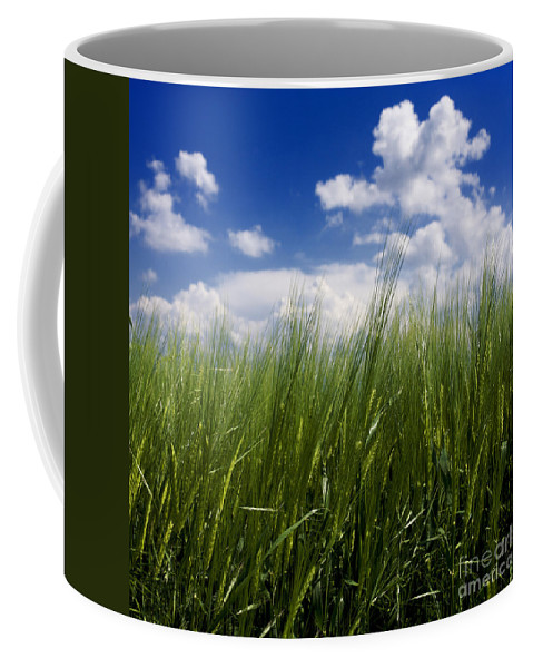 Yet Coffee Mug featuring the photograph Barley Field In Limagne. Auvergne. France by Bernard Jaubert
