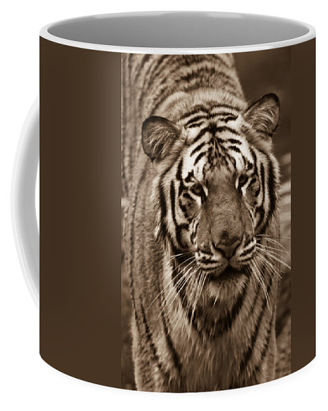 Bengal Coffee Mug featuring the photograph Bengal Tiger On The Prowl by Douglas Barnett