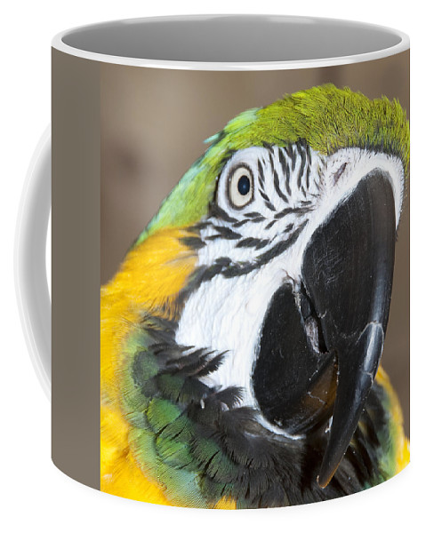 Photography Coffee Mug featuring the photograph Blue And Gold Macaw by Steven Natanson