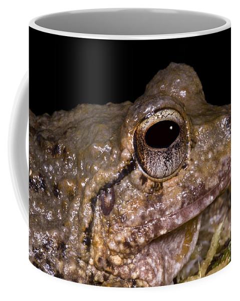 Craugastoridae Coffee Mug featuring the photograph Bobs Robber Frog by Dante Fenolio