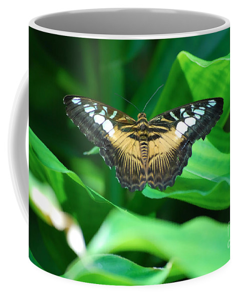 Butterfly Butterflies Coffee Mug featuring the photograph Broken by Diego Re
