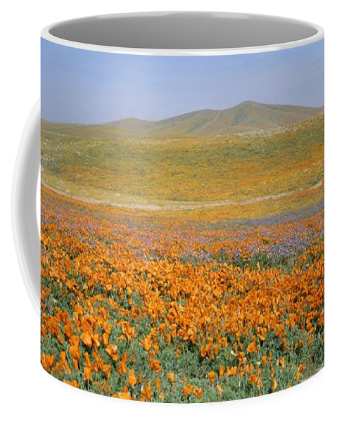 North America Coffee Mug featuring the photograph California Poppies Fill A Landscape by Rich Reid