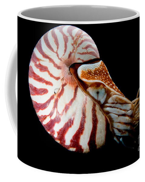 Nautilus Pompilius Coffee Mug featuring the photograph Chambered Nautilus by Dant� Fenolio