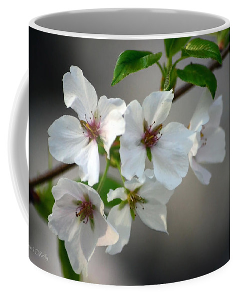Cherry Blossoms Coffee Mug featuring the photograph Cherry Blossoms by Sandi OReilly