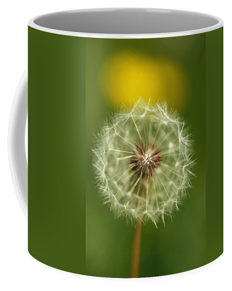Plants Coffee Mug featuring the photograph Close View Of A Dandelion Gone To Seed by Nicole Duplaix