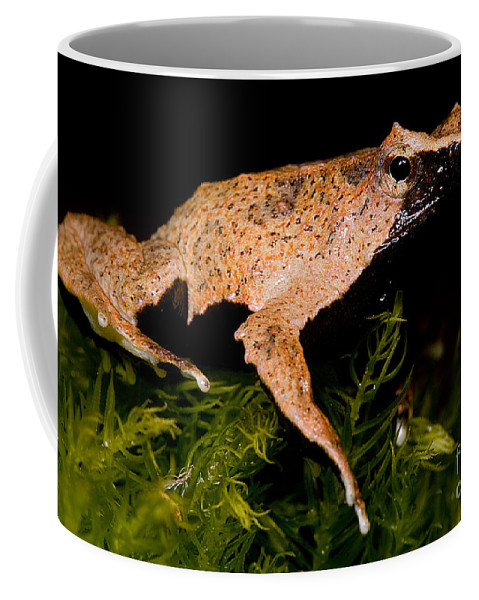 Darwin's Frogs Coffee Mug featuring the photograph Darwins Frog by Dant� Fenolio