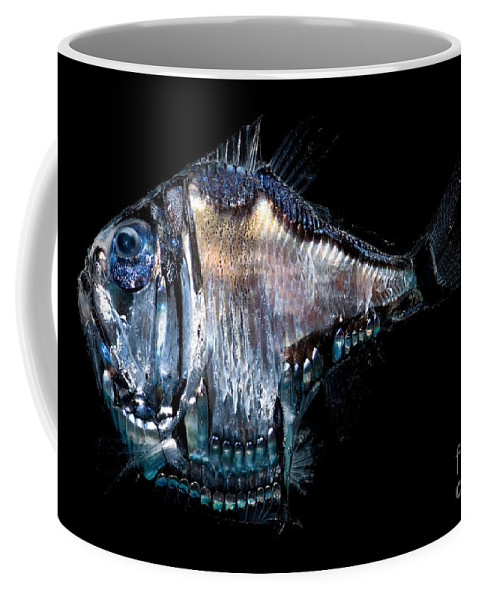 Mesopelagic Coffee Mug featuring the photograph Deep-sea Hatchetfish by Dant� Fenolio
