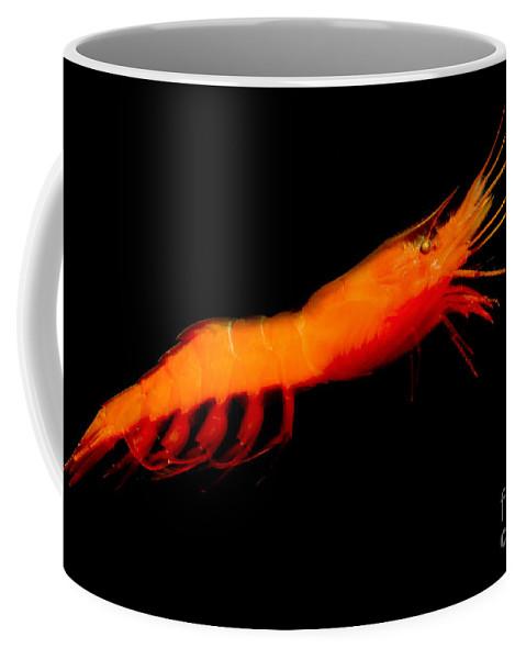 Prawn Coffee Mug featuring the photograph Deep-sea Prawn by Dant� Fenolio