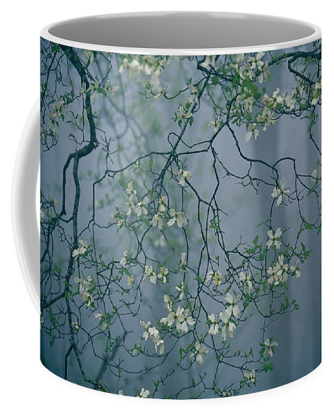 Fort Mountain State Park Coffee Mug featuring the photograph Dogwood Blossoms In A Foggy Forest by Raymond Gehman