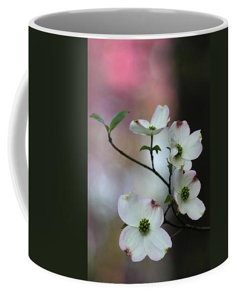 Cornus Florida Coffee Mug featuring the photograph Dogwood by Daniel Reed