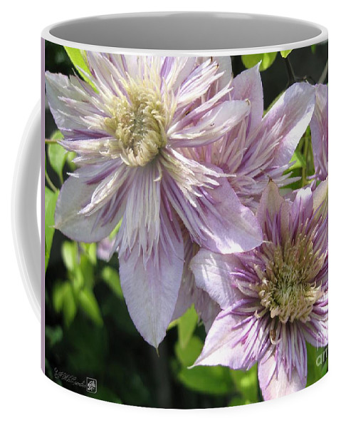 Double Clematis Coffee Mug featuring the photograph Double Clematis Named Empress by J McCombie