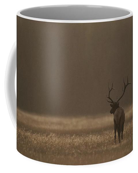 Animals Coffee Mug featuring the photograph Elk Or Wapiti Bull At Sunset by Raymond Gehman