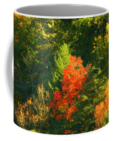 Fall Coffee Mug featuring the photograph Fall Colors by Kathleen Struckle