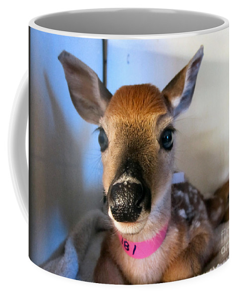 Fawn Coffee Mug featuring the photograph Gentle by Art Dingo
