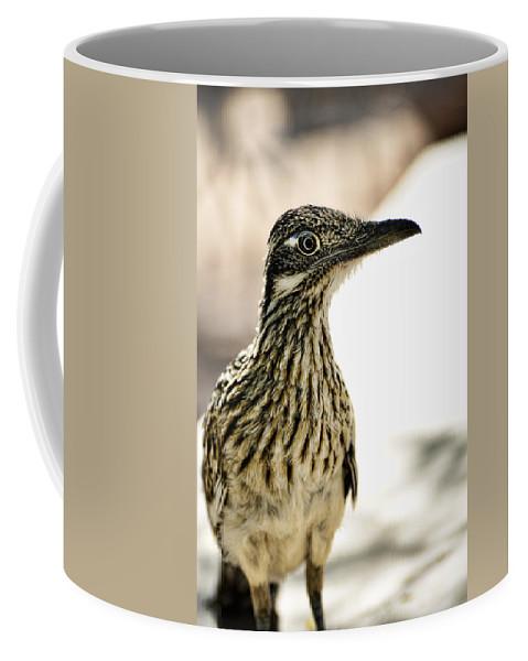 Greater Roadrunner Coffee Mug featuring the photograph Greater Roadrunner by Saija Lehtonen