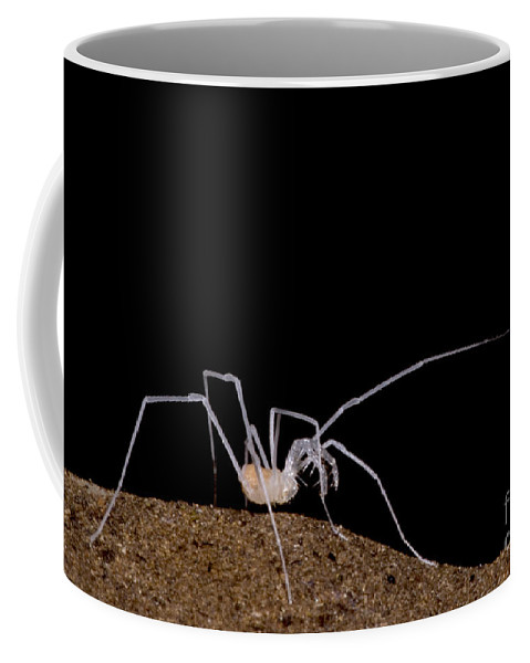 Harvestmen Coffee Mug featuring the photograph Harvestman by Dante Fenolio