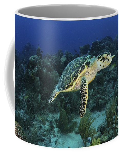 Coral Reef Coffee Mug featuring the photograph Hawksbill Turtle On Caribbean Reef by Karen Doody