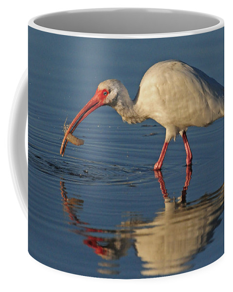Ibis Coffee Mug featuring the photograph Ibis With Shrimp by Dave Mills
