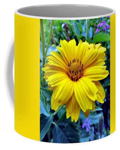 Daisy Coffee Mug featuring the photograph Lazy Daisy by Art Dingo