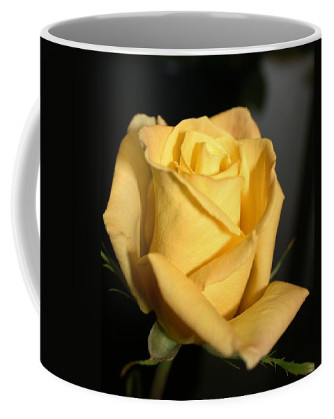 Flora Coffee Mug featuring the photograph Mornings Light by Bruce Bley