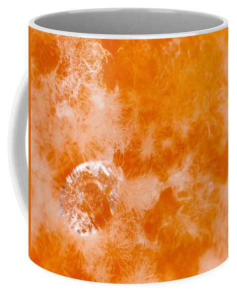 Orange Coffee Mug featuring the photograph Orange 2 by Jeffery Ball