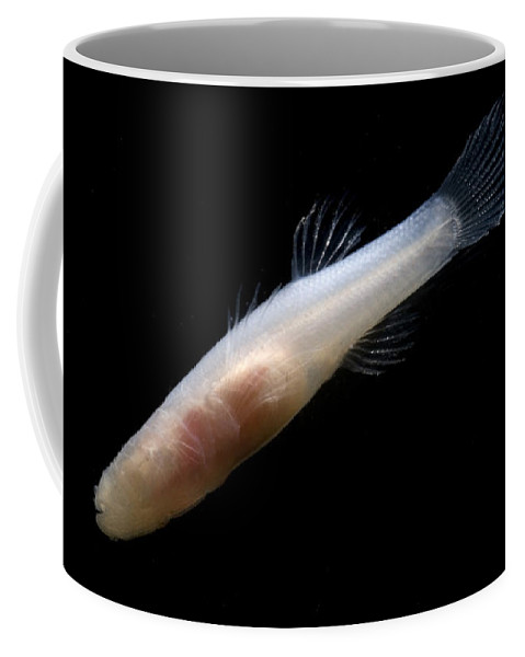 Amblyopsis Coffee Mug featuring the photograph Ozark Cave Fish by Dante Fenolio
