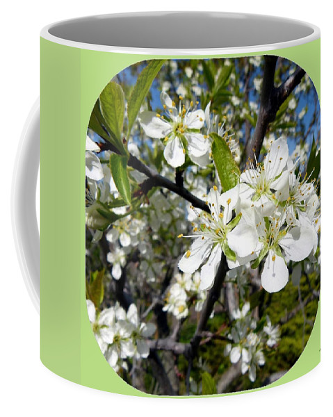 Prune Plum Tree Coffee Mug featuring the photograph Plum Blossoms by Will Borden