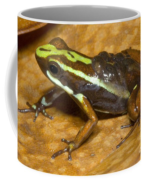 Animal Coffee Mug featuring the photograph Poison Frog With Eggs by Dante Fenolio