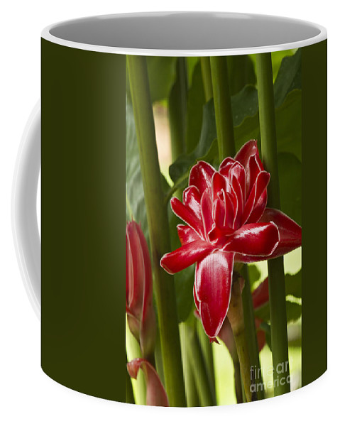 Nature Coffee Mug featuring the photograph Red Ginger Lily by Heiko Koehrer-Wagner