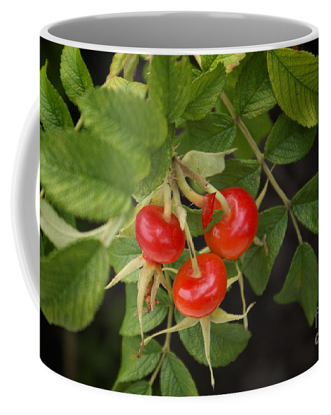 Architecture Coffee Mug featuring the digital art Rosehips by Carol Ailles