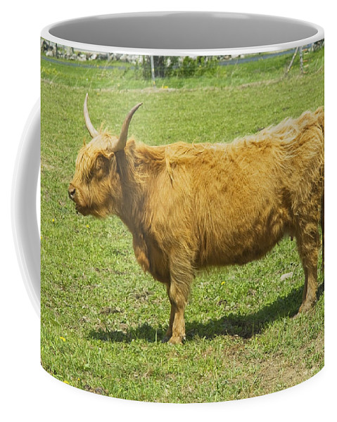Cow Coffee Mug featuring the photograph Scottish Highland Cow In Farm Field Maine by Keith Webber Jr