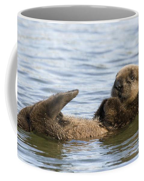 00429677 Coffee Mug featuring the photograph Sea Otter Pup Elkhorn Slough Monterey by Sebastian Kennerknecht