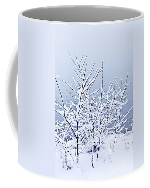 Winter Coffee Mug featuring the photograph Snowy Trees by Elena Elisseeva