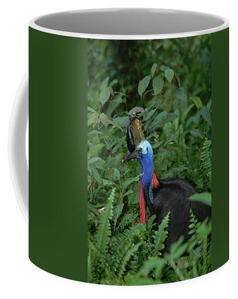 Mp Coffee Mug featuring the photograph Southern Cassowary Casuarius Casuarius by Konrad Wothe