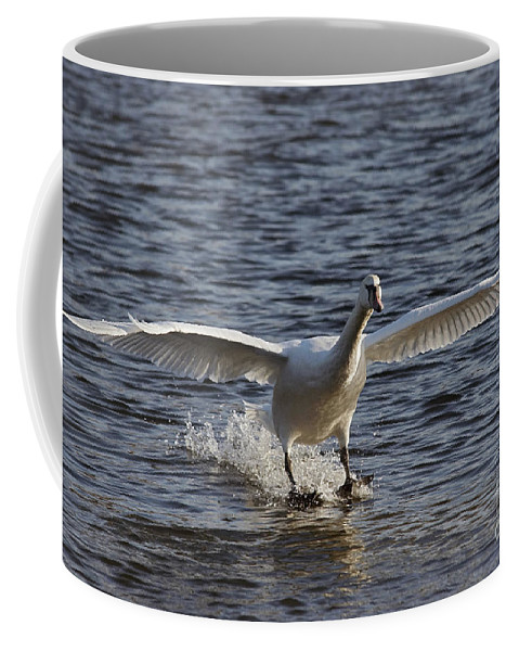 Nature Coffee Mug featuring the photograph Splashdown - Water Skiing by Michal Boubin