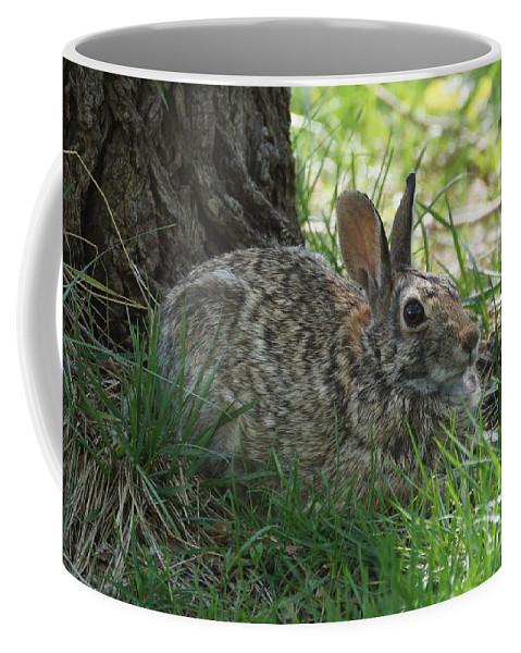Rabbit Coffee Mug featuring the photograph Spring Time Rabbit by Lori Tordsen