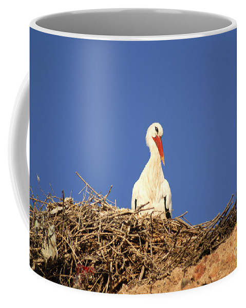 Africa Coffee Mug featuring the digital art Storks In Marrakech by Carol Ailles