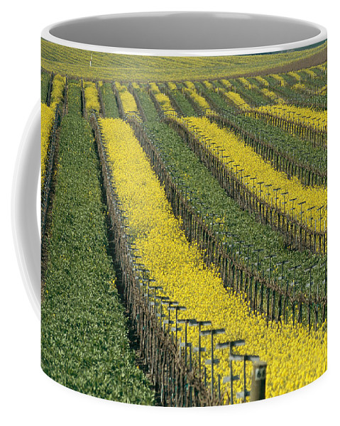 Fields Coffee Mug featuring the photograph Vineyards In Californias Edna Valley by Michael S. Lewis