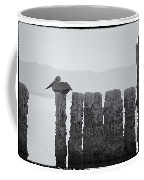 Birds Coffee Mug featuring the photograph Waiting For Sunday by Linda Dunn
