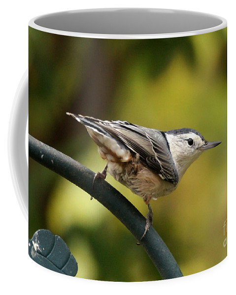 Birds Coffee Mug featuring the photograph Nuthatch by Lori Tordsen