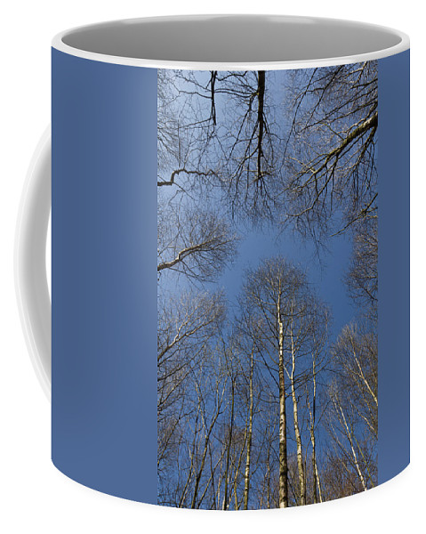 Tree Coffee Mug featuring the photograph Trees In Epping Forest by David Pyatt