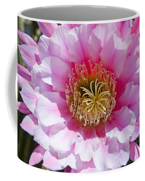 Spring Coffee Mug featuring the photograph Pink Cactus Flower by Jim And Emily Bush