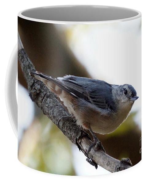 Birds Coffee Mug featuring the photograph Nuthatch by Lori Tordsen